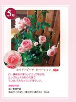 monthly_04_img02.jpg
